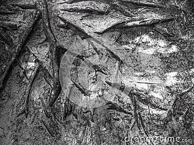 A árvore enraíza o fundo