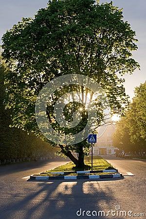 Árvore maravilhosa com por do sol