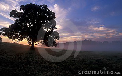 Árvore no nascer do sol