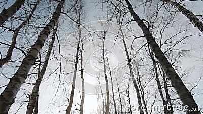 Árvores contra a iluminação traseira vídeos de arquivo