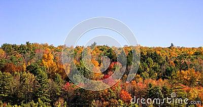 Árvores do outono