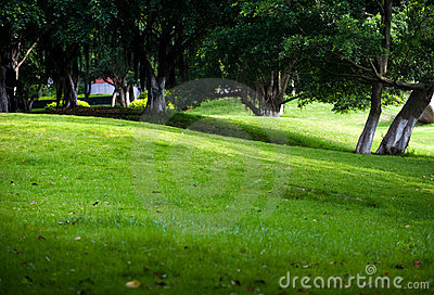 Árvores e gramado