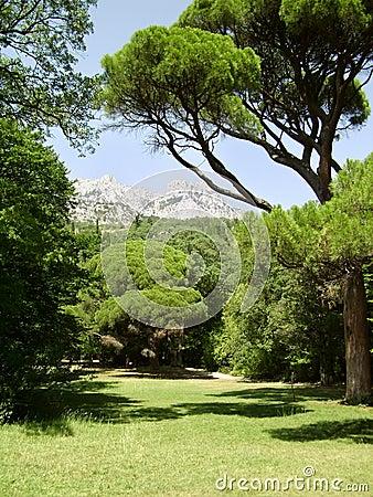 Árvores e gramado em um dia de verão brilhante