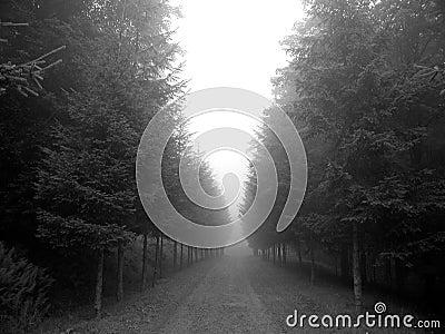 Árvores nevoentas