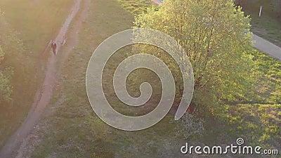 ?rvores no parque e um homem que anda ao longo do trajeto video estoque