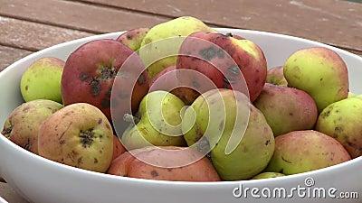 Äpfel in einer weißen Schüssel stock video