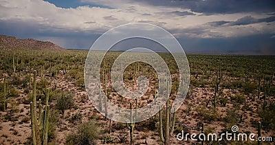 寄生虫在大气仙人掌沙漠领域上的飞行低落往在史诗亚利桑那国立公园美国的大沙尘暴云彩 股票录像