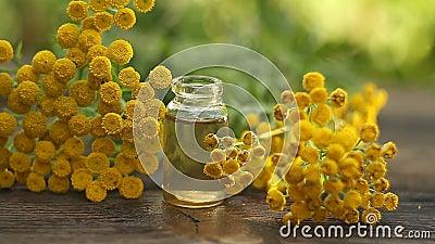 在美丽的瓶的艾菊精油在桌上