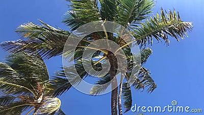 在风的棕榈树 影视素材