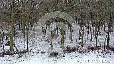 冬天森林Lauersfort的鸟瞰图在摩尔斯,德国 股票录像