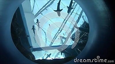 École des requins nageant dans l'aquarium banque de vidéos