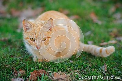 Égrappage de chat