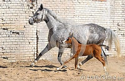 Égua e potro pequeno