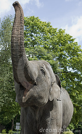 Éléphant dans le zoo
