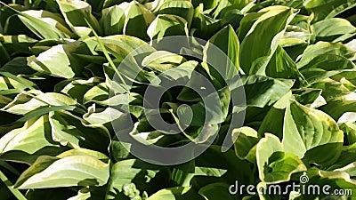 Épanouissement de la végétation avec des couleurs lumineuses pendant l'été clips vidéos