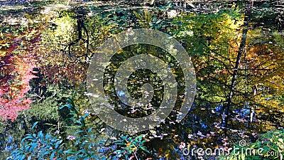 Étang aux reflets d'automne glorieux banque de vidéos