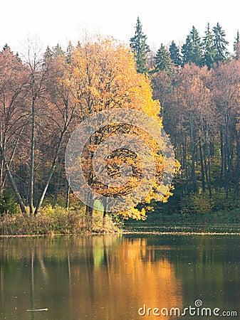 Étang d automne