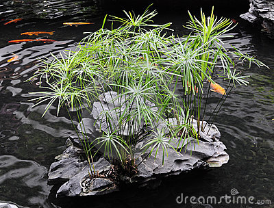 étang de jardin de Chinois-type