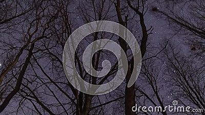 Étoiles battant la nuit avec l'arbre clips vidéos