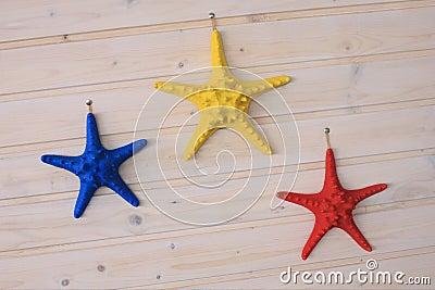 Étoiles de mer colorées