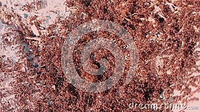 Αποικία μυρμηγκιών στην οδό φιλμ μικρού μήκους