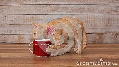 Γατάκι που τρώει τα κλεμμένα τρόφιμα από τη βαθιά κούπα απόθεμα βίντεο