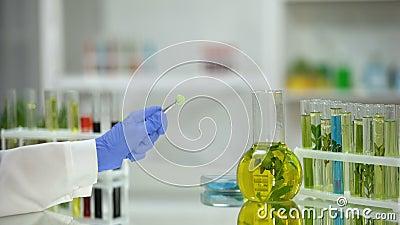 Εργαστηρίων βοηθητικό χάπι, σωλήνες και φιάλη εκμετάλλευσης πράσινο με τα εκχυλίσματα φυτών στον πίνακα απόθεμα βίντεο