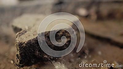 Κινηματογράφηση σε πρώτο πλάνο του πατώματος στο παλαιό κτήριο Ιστοί αράχνης και ρύπος απόθεμα βίντεο
