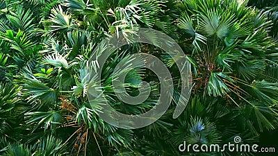 Ο ισχυρός άνεμος ή ο βαρύς αέρας κάμπτει το δέντρο στο έδαφος, υψηλή άποψη γωνίας απόθεμα βίντεο