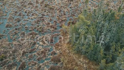 Île de marais d'arbre banque de vidéos