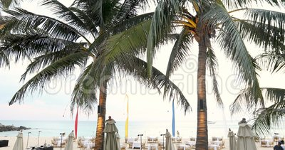 Τροπικοί φοίνικες στην παραλία απόθεμα βίντεο