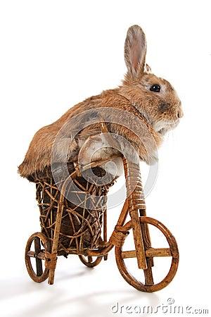 Сute rabbit riding bike