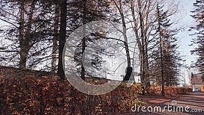 Небольшой парк осенью Камера двигая через парк Листво осени сток-видео