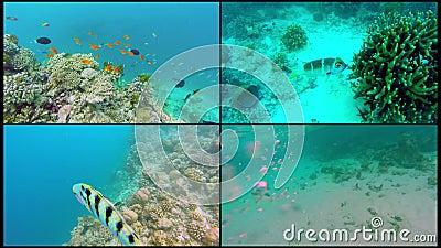 Пейзаж океана коллажа на мелком коралловом рифе Подводное видео океана Небольшие рыбы плавают перекатно и спрятанный мимо видеоматериал