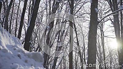 Пуща в зиме зима температуры России ландшафта 33c января ural сток-видео