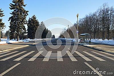 Сrosswalk with the zebra