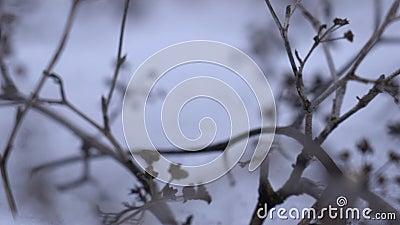 Сухой лопух с большими крышками против предпосылки в туманном дне акции видеоматериалы