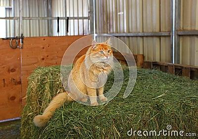 Óscar el gato del granero