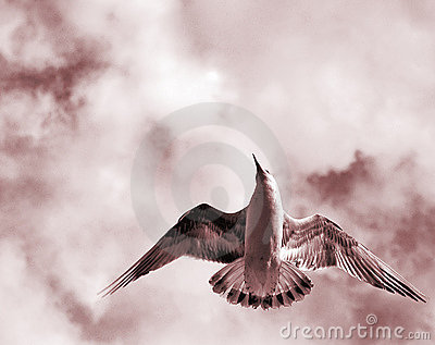 öppna vingar för fågel