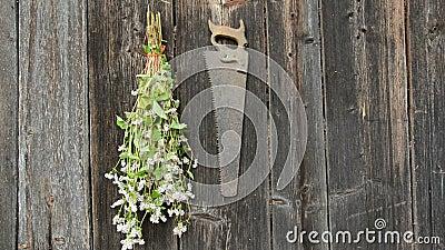 Örter för hängande trädgård samlar ihop på den gamla träväggen