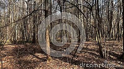 Övergång till skogarnas grundliga tid förfaller Himmelse av att gå genom de vackra skogarna Rörelse mellan träd Snabbmovi lager videofilmer