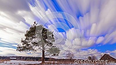 Única árvore contra o céu blurry Lapso de tempo filme