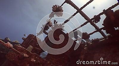 Überreste des versunkenen Schiffs Salem Express Unterwasser im Roten Meer in Ägypten stock footage
