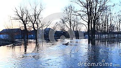 Überschwemmung von Fluss im Frühjahr in der Stadt während der Schneeschmelze trockenes Klima bei Thailand stock video