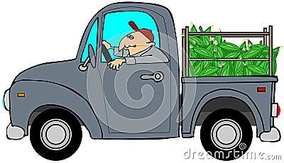 Ładunek ciężarówki kukurudza
