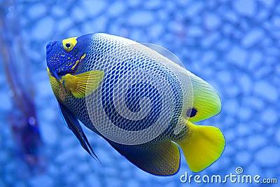 łowi tropikalnego