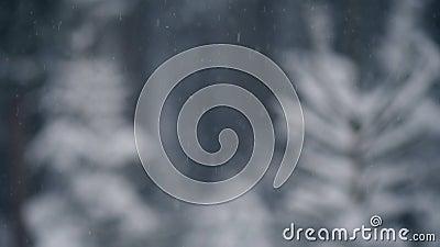 Śnieg Z Z ostrość drzewami zdjęcie wideo