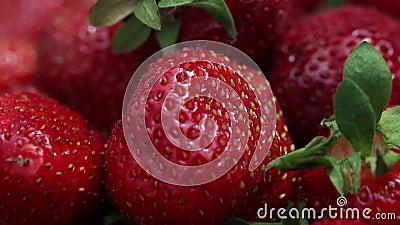 świeże truskawki Apetyczne i wyśmienicie piękne truskawki Truskawka na Zielonym tle Najlepszy czerwona truskawka zdjęcie wideo