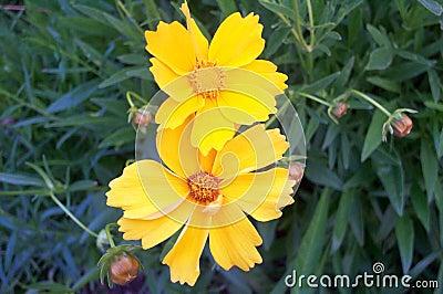 żółte kwiaty