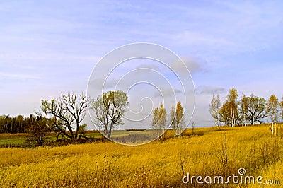 Żółty niebieskie niebo i pole